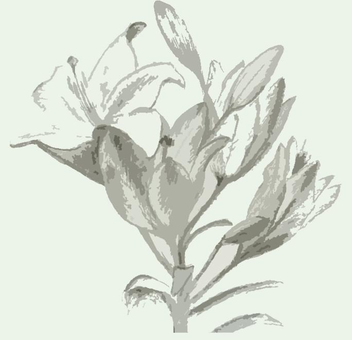 lilijas